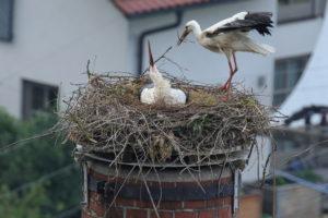 Foto: Georg Stahlbauer, Alle Rechte vorbehalten, All rights reserved